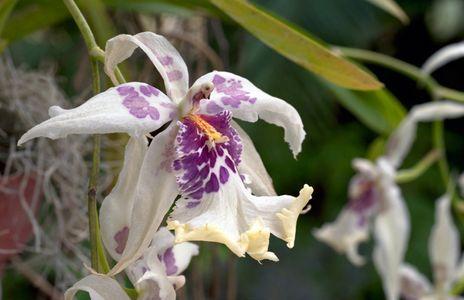 Orchid art print macro for interior design
