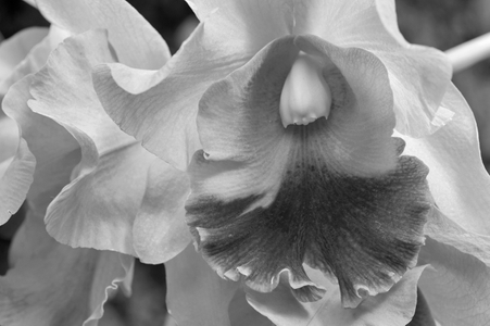 Orchid flower photography black & white art print for home and office interior design