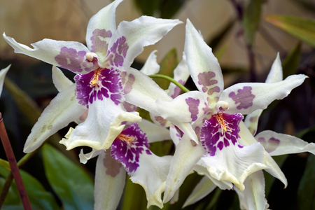 Orchid photography art print for interior design