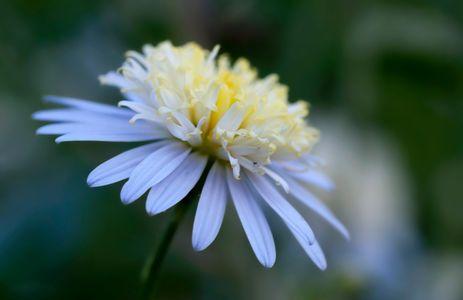 Macro floral photo art print
