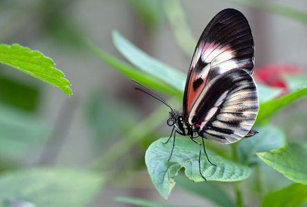 Butterfly macro photo art print