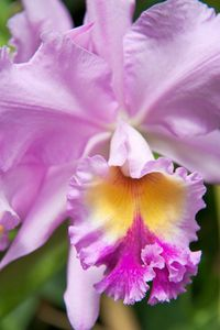 Orchid flower art print for home and office
