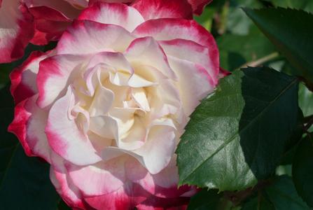Flower photo art prints