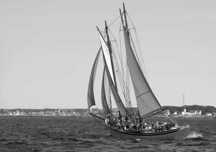 Schooner American Eagle of Rockland, Maine in Gloucester, MA art print
