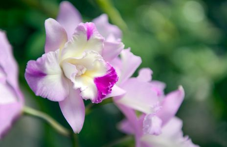 Orchid flower photography art print for home and office