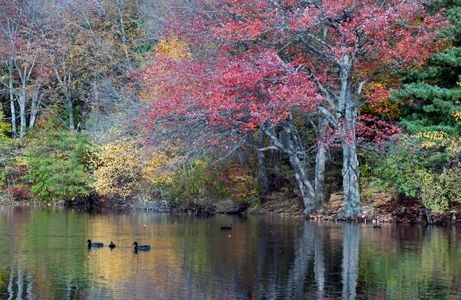 Fall Pond Reflections in Salem, Massachusetts
