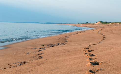 Beach Landscape - Footsteps in the Sand - Plum Island