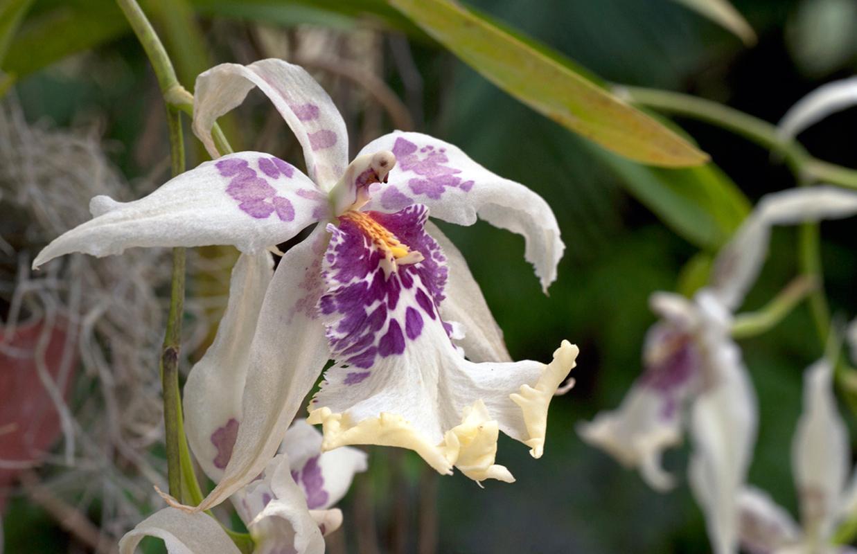 Orchid art print for interior design