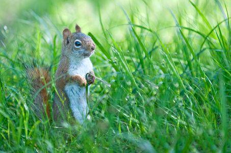 squirrel photo art print photo