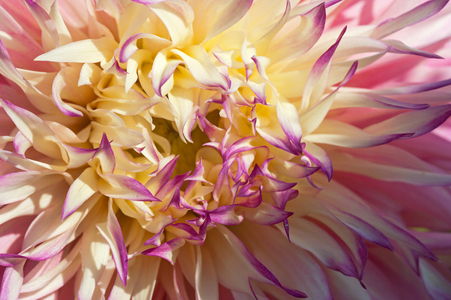 Flower Photography Art Prints for Home and Office Interior Design