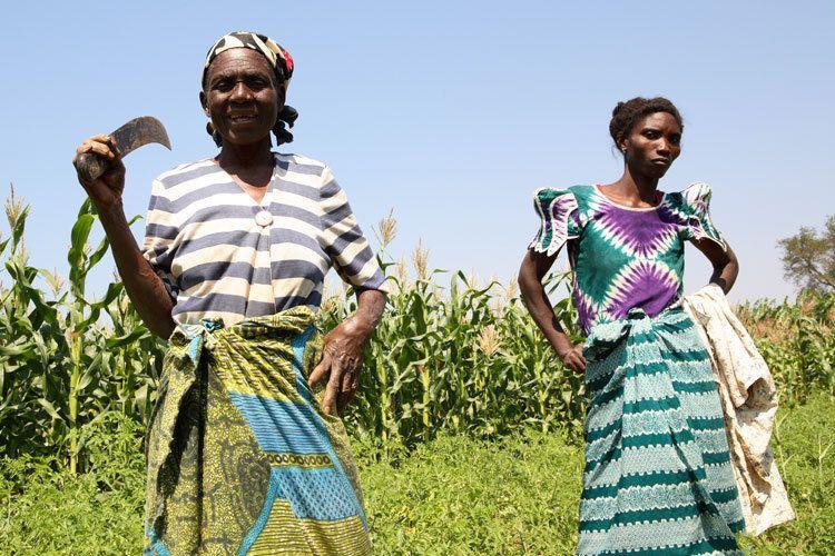 1malawi_women_farming.jpg