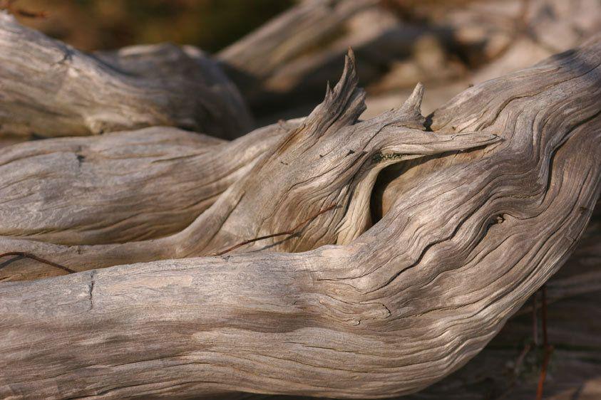 1driftwood