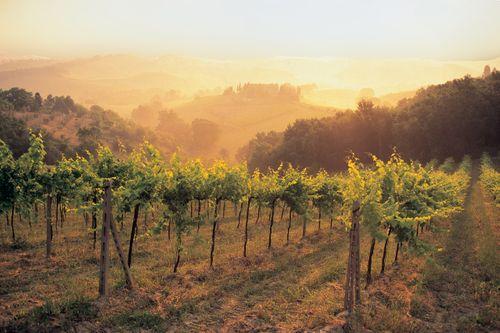 20090824- Tuscany RGB.tif 2.jpg