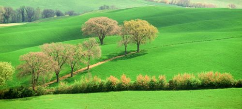 Tuscan Spring.jpg