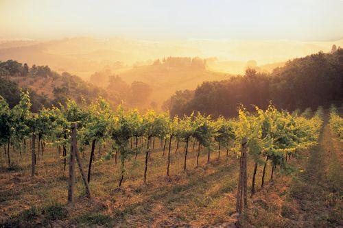 20090824- Tuscany RGB.tif #2.jpg