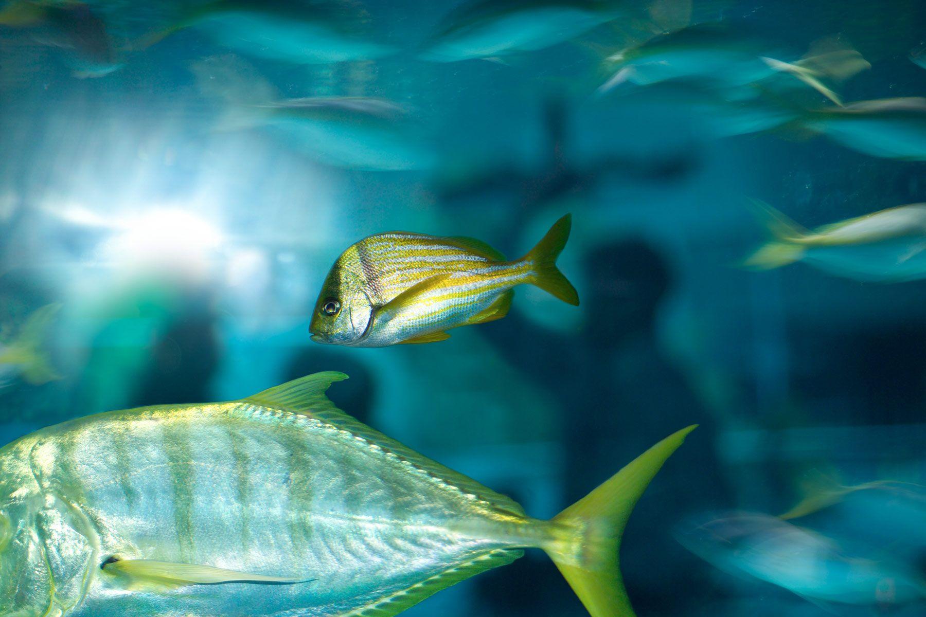 Aquarium-Resturant-server-and-fish.jpg