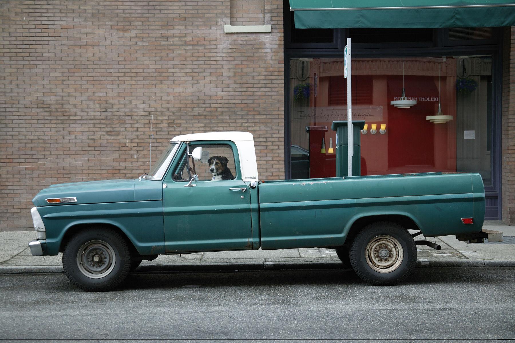 5_1dog_his_truck.jpg