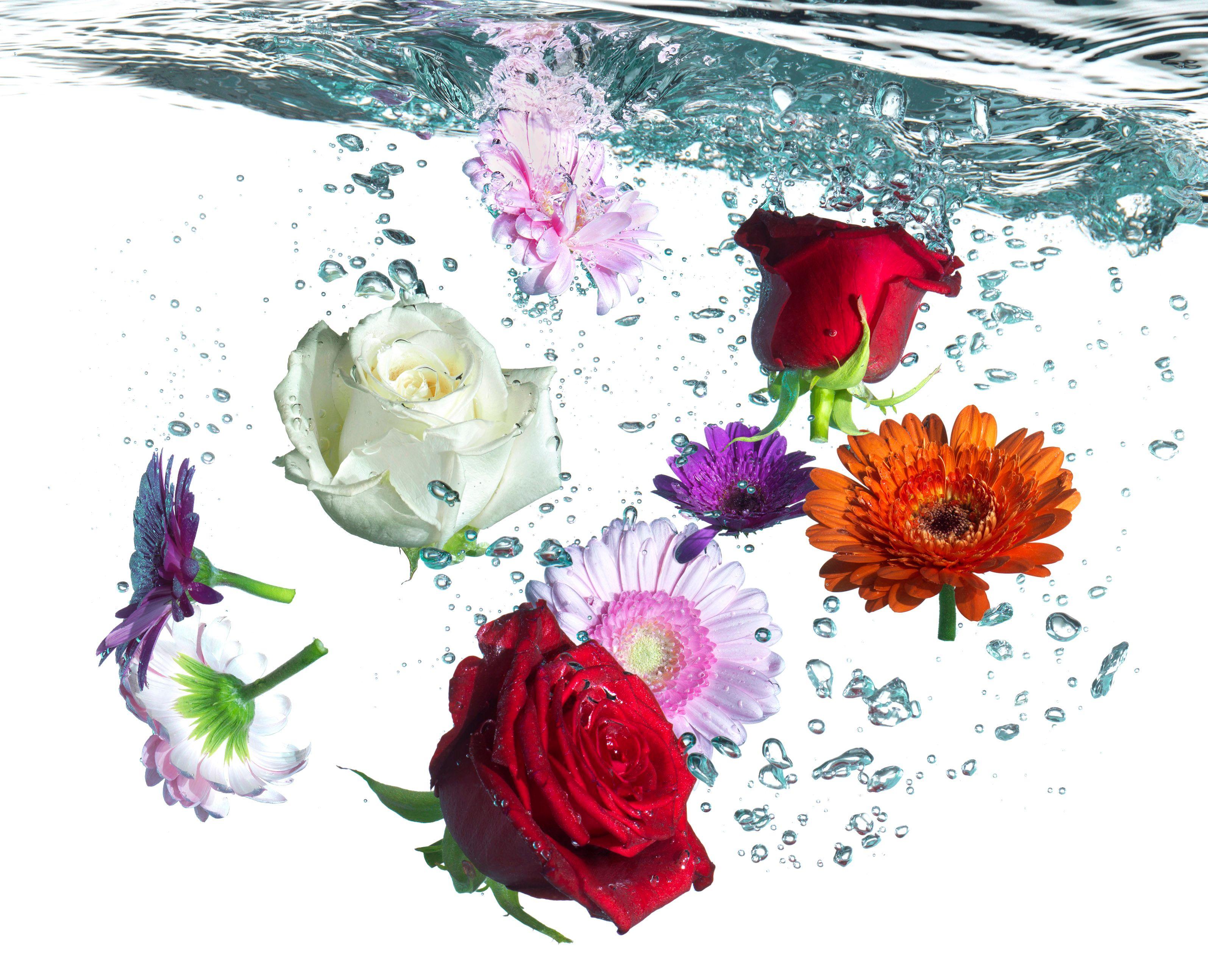 Cultilene bloemen final.jpg