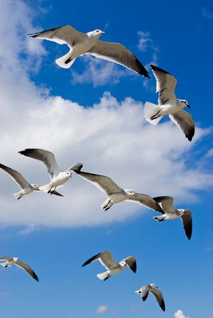 Seagulls - Port Aransas,Texas