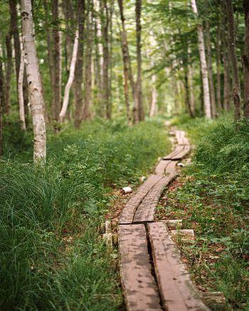 1Acadia_boardwalk_trail