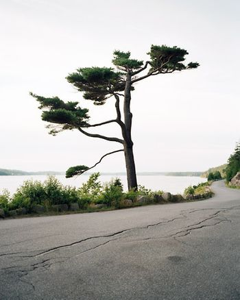 1somes_sound_tree