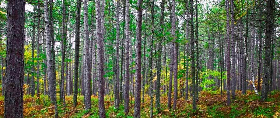 FORESTMICHIGAMIMAGE # 12003