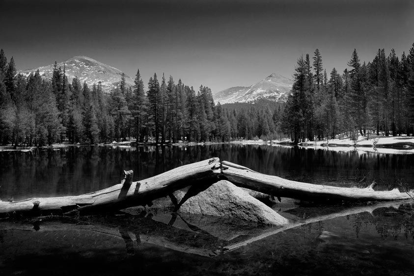 BROKEN TREE, POND, TIOGA PASS, SPRINGYOSEMITE NATIONAL PARK, CALIFORNIAIMAGE # 11602