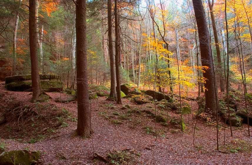 TREES, ASH CAVE, AUTUMNHOCKING HILLS, OHIOIMAGE # 11544