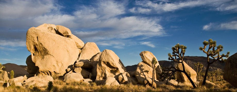 FORMATION AND JOSHUA TREESJOSHUA TREE NATIONAL PARK, CALIFORNIAIMAGE # 11930