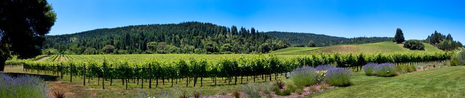 Goldereye Vineyard, Anderson Valley, California