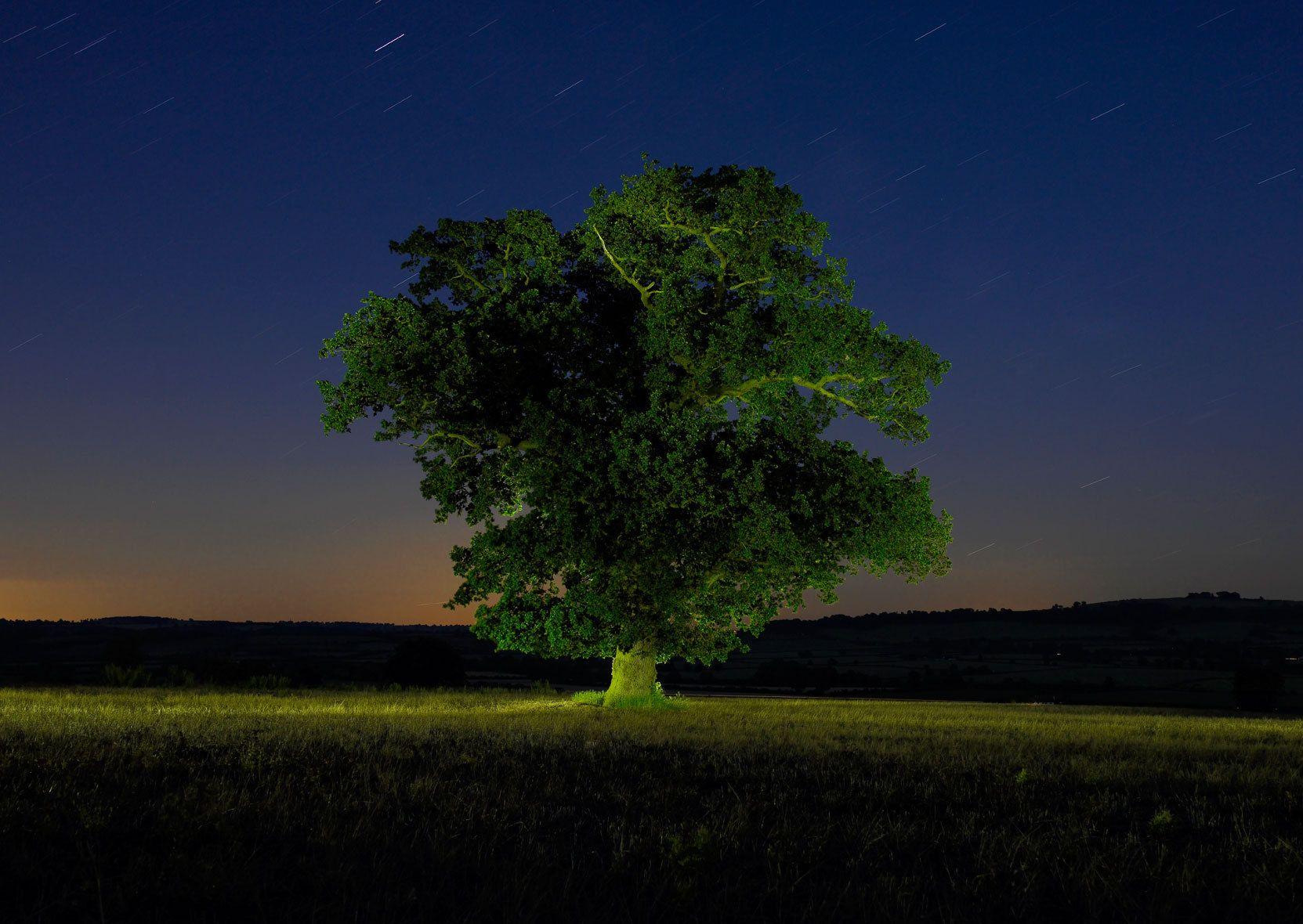 Cotswolds Oak