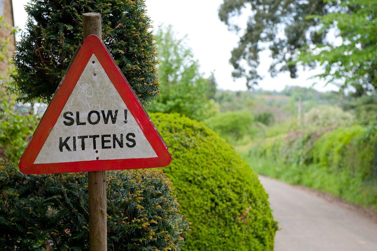 kittens-000107.jpg