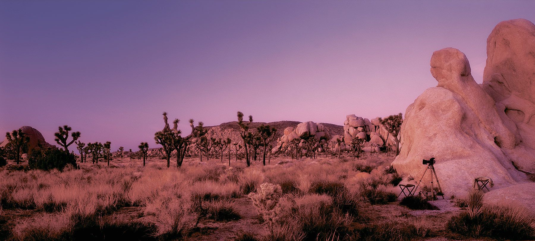 Joshua Tree - California
