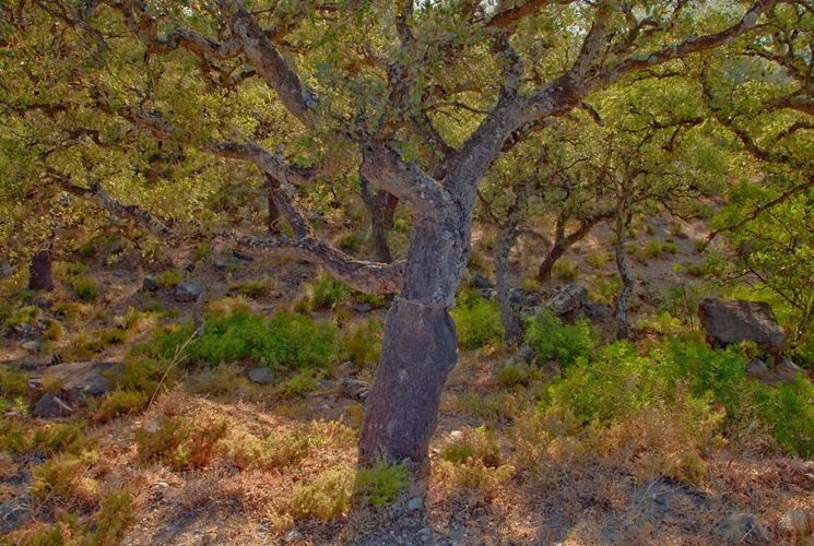 web-tree-4-blog.jpg