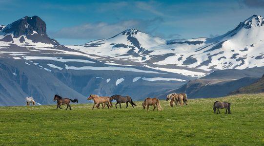 Iceland-13-D-17-06-05-3090-Crop-&-Clone-(Horses-2017).jpg