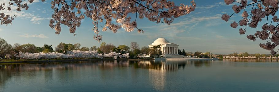D-12-03-19-9334_44-(Jefferson-Cherry-Trees-Pano).jpg