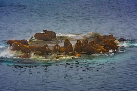 D-16-09-04-4401-(Walruses).jpg