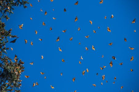 D-18-01-09-850_1801-Clone-(Monarchs-in-Sky).jpg