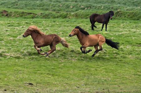 Iceland-05-D-17-06-06-3403-Crop-(Horses).jpg
