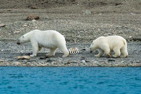 D-16-08-27-0743-(Polar-Bears).jpg