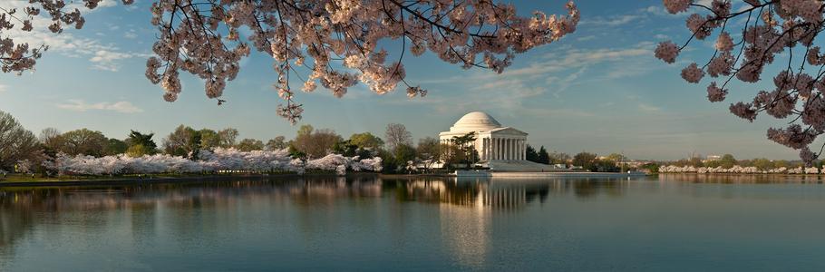 D-12-03-19-9334_44-(Jefferson-Cherry-Trees-Pano).jpg