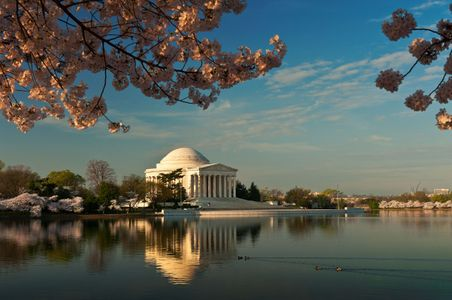 D-12-03-19-9327-(Jefferson-and-Cherry-Blossoms).jpg