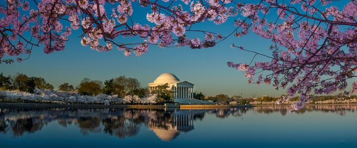 D-07-04-03-106_108-(Cherry-Blossoms-and-Tidal-Basin).jpg