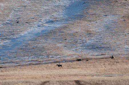 Moving pasture