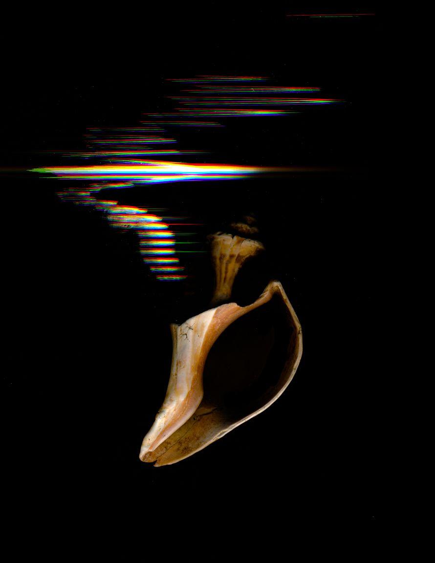 sea shell l_20170616_0001.jpg
