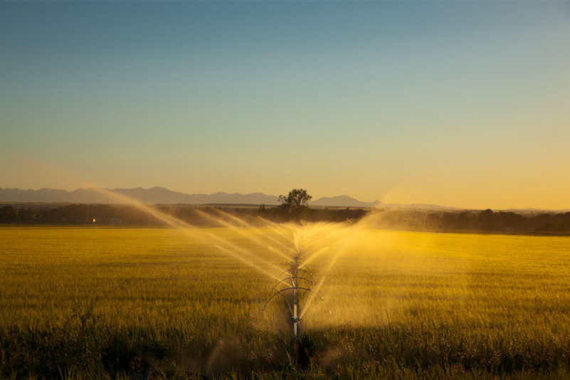 Watering at sunset