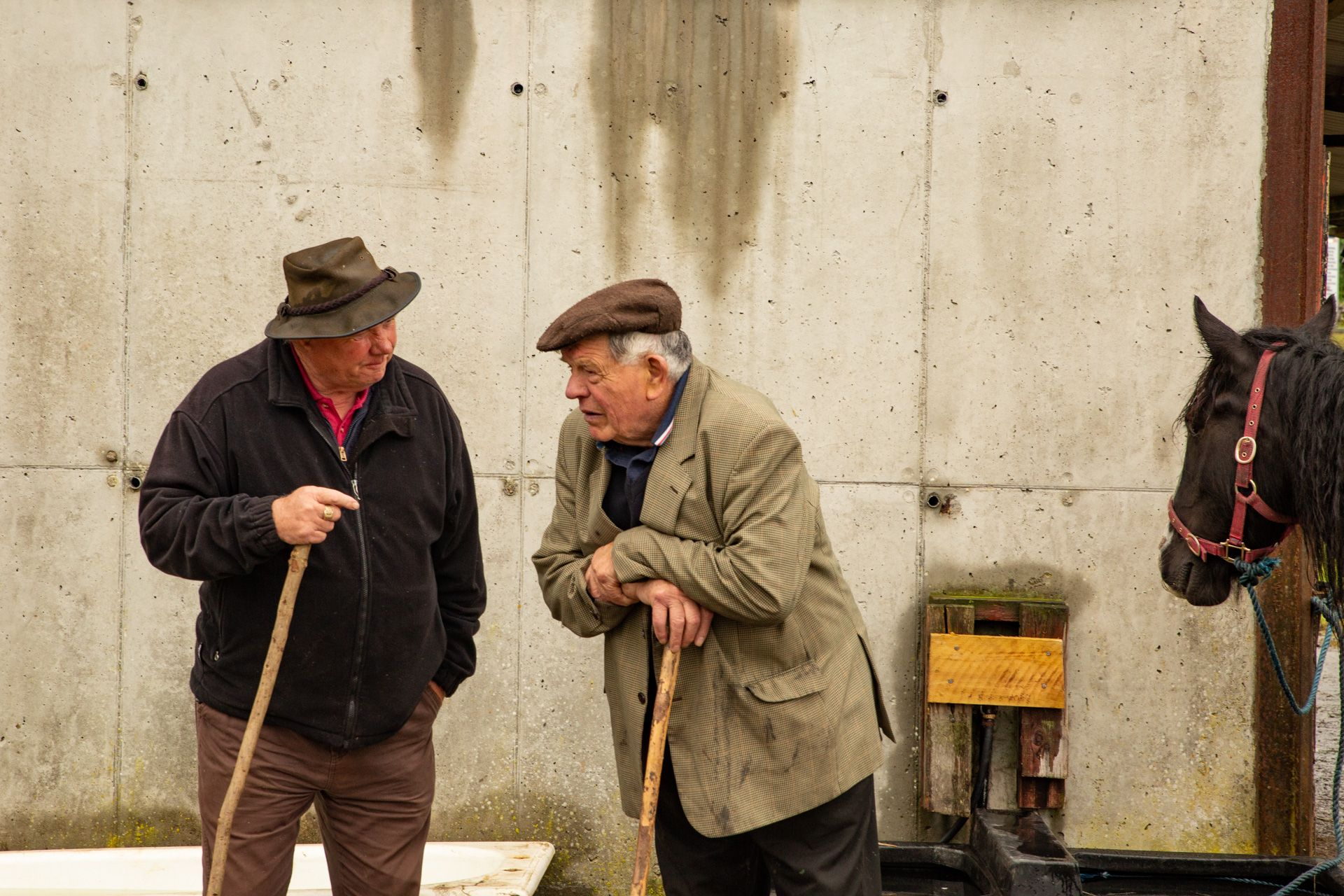 Two Irish Gentlemen and  a Horse's Head, Stancill Ireland