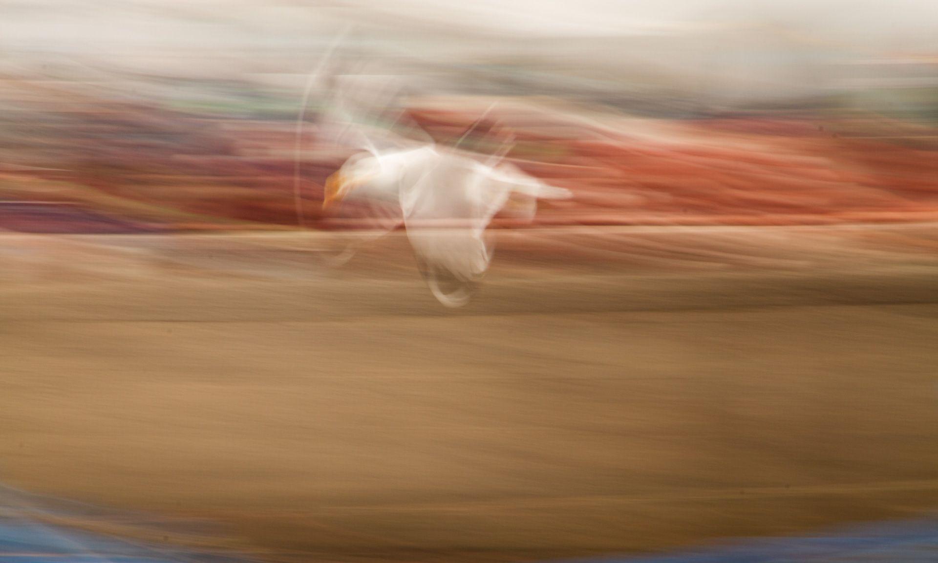 Slow Shutter Speed-10.jpg
