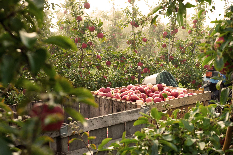 Champlain-Orchards.jpg