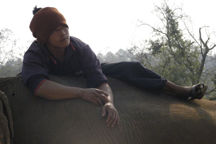 Elephant Trainer, Chiang Mai, Thailand